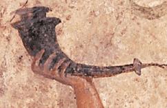 Ancient Roman Rhyton