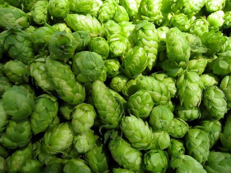 delicious hops
